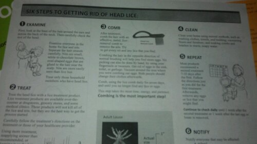 head lice pamphlet